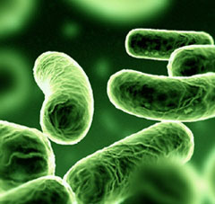 immagine 8 microbiota